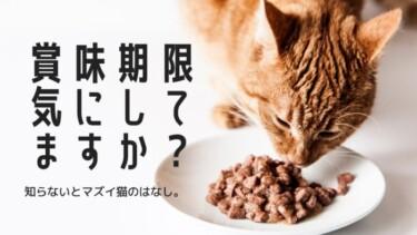 賞味期限切れのキャットフードは食べちゃダメ?危険性と注意点をくわしく解説