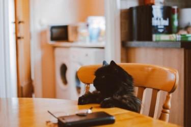 猫の餌は1日3回〜4回で時間を分けた方が良い理由【忙しい人でも可能です】